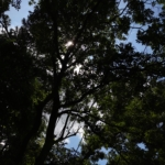 Thumbnail of post image 102